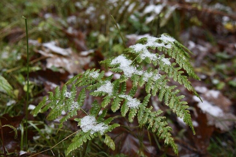 Der Winter klopft an: Erste Schneeflocken auf dem Aschberg