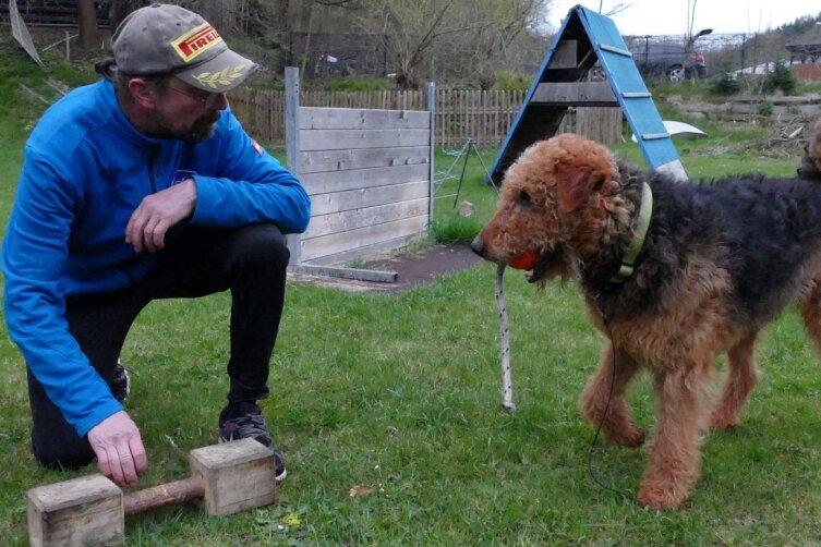 Seine elf Jahre sind Fox von Wales kaum anzumerken. Obwohl der Hund von Holger Loose schon zu den alten Knaben zählt, wirkt er immer noch topfit. Als Motivation winkt nach dem Meistern von Aufgaben oder Hindernissen das Spiel mit einem Ball.