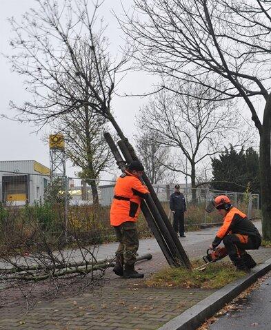 Fäll-Aktion an Sachsens Straßen: 7122 Bäume müssen weichen