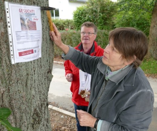 An einem Baum im Amtsberger Ortsteil Schlößchen bringt Kristine Tannenhauer einen von über 100 Steckbriefen an. Unterstützt wird sie bei ihrer Suchaktion von Peter Heimlich und vier weiteren Helfern.