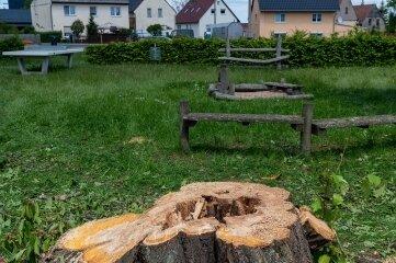 Der Kirschbaum ist weg. Der Stamm zeigt, dass der Baum innen bereits hohl war.