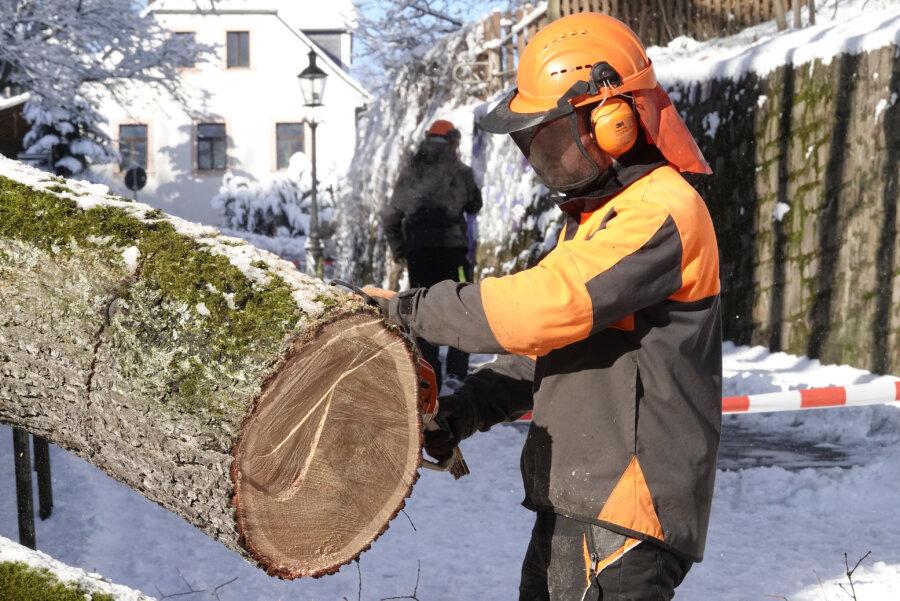 Umgestürzter Baum wird beseitigt