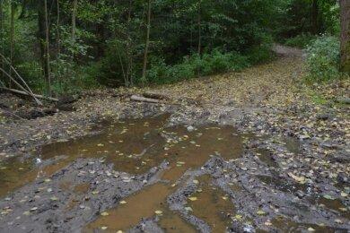 Nach dem regenreichen Sommer stehen Waldwege unter Wasser, hier an der Weggabelung hinter dem Ortsausgang Kirchbach in Richtung Oberschöna. Auch Baumstämme versperren die Wege.
