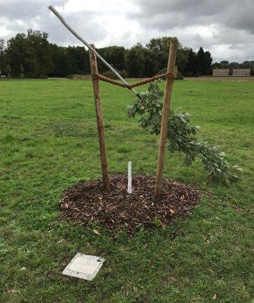 Der abgesägte Baum auf dem Schwanenteichgelände. Davor das Schild, das an das erste Opfer des NSU, Enver Şimşek, erinnert.
