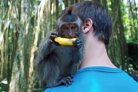 Goldene Regel: Banane sofort rausrücken - sonst kann es mächtig wehtun.