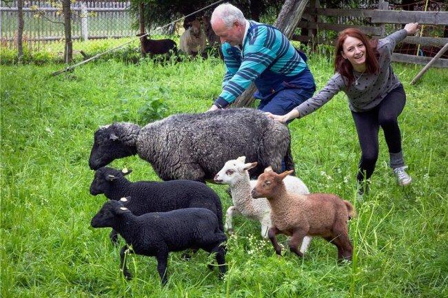 Seit einem Jahr praktiziert Tierärztin Franziska Lindner - hier im Bild mit Schafhalter Stefan Graebner - in ihrer Praxis in Augustusburg. Auch vor und nach Feierabend ist die junge Frau auf dem heimatlichen Hof in Waldkirchen für das liebe Vieh da. Die Schafvierlinge Carlson, Carina, Cora und Carlesia sorgen für gehörigen Wirbel auf der Weide.