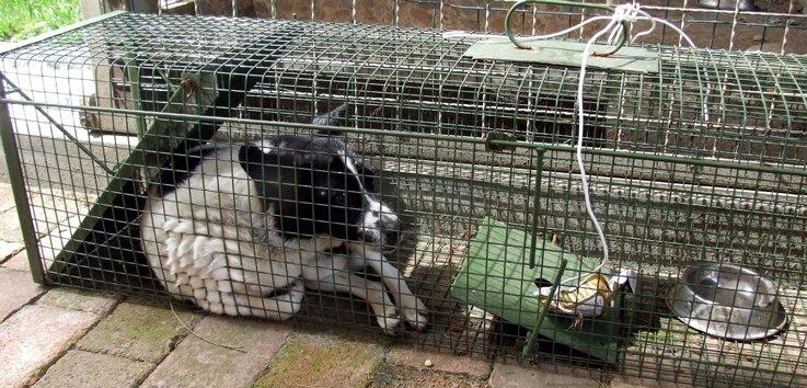 "<p class=""artikelinhalt"">Falle ins Glück: Jack-Russel-Terrier Tina wurde von der Bergwacht gerettet.</p>"