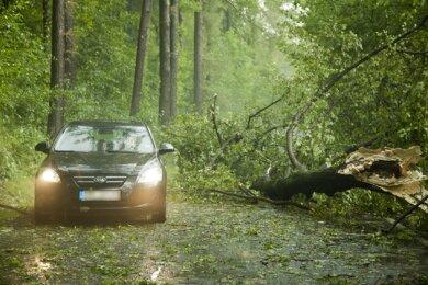 Zahlreiche Bäume sind im Erzgebirge nach heftigen Gewittern umgestürzt.