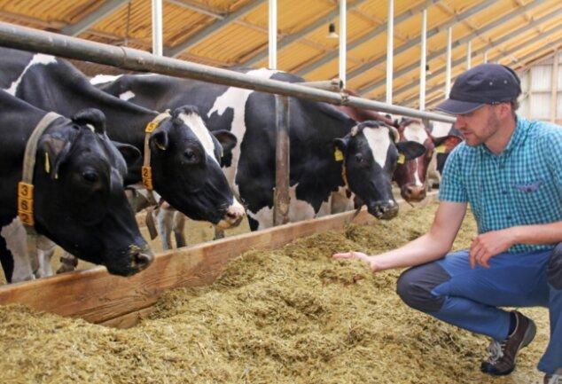 Christoph Hänel, Vorsitzender der Agrargenossenschaft, bei den Milchkühen im Stall.