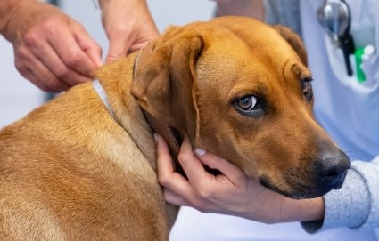 Hunde zum Verzehr zu schlachten ist in Deutschland nicht nur tabu, sondern auch verboten!