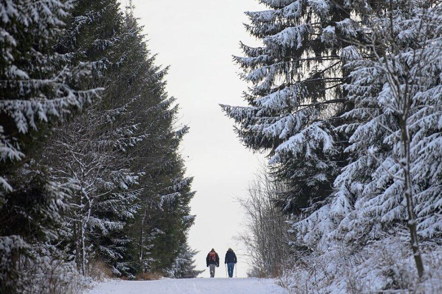 """Verschneiter Wald. Es herrscht Ruhe an der """"Borkenkäferfront"""". Mit Argusaugen schauen die Forstleute daher auf das Wetter."""