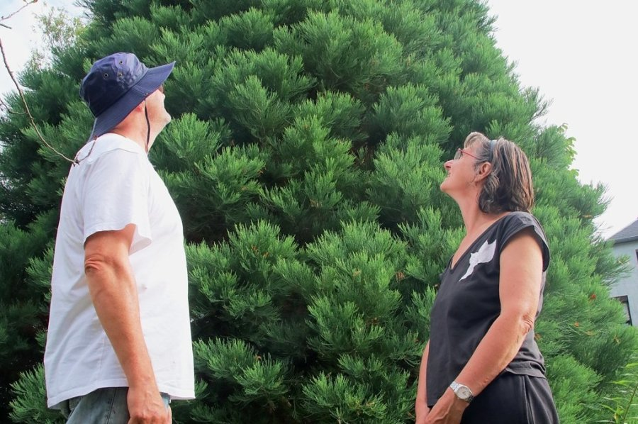 Gabriele und Andreas Schubert haben den ältesten Baum der Erde in ihrem Garten stehen.