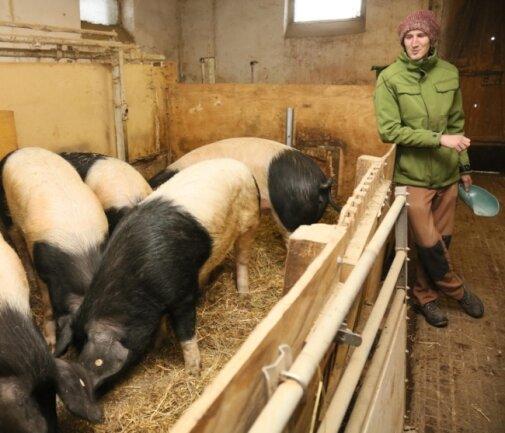 Die Sattelschweine verdanken ihren Namen dem weißen Sattel. Den haben sie schon von Geburt an, versichert Robert Seidel (29).