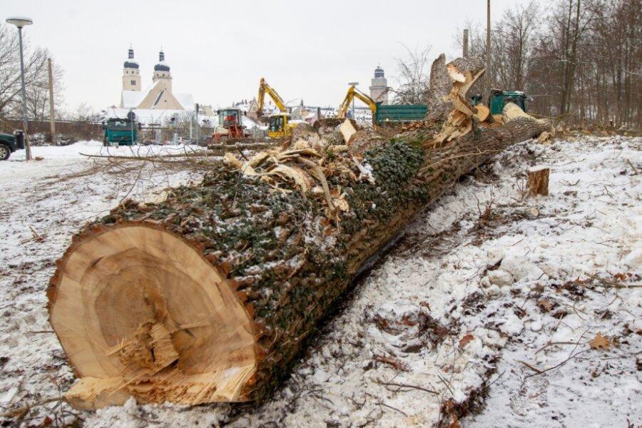 Vor dem Bau der Elsterbrücke: Bäume für Abwasserkanal gefällt