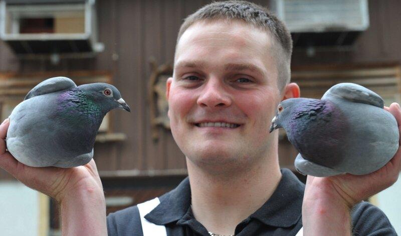 """<p class=""""artikelinhalt"""">Der Clausnitzer André Köhler ist mit Leib und Seele Brieftaubenzüchter. In der Hand hält er zwei Taubenweibchen, die das Leistungsniveau auf Sachsenebene mitbestimmen. </p>"""