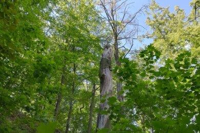 Besucher des Wasserwerksparkes sollten auf absterbende Bäume wie diese in der Mitte achten, rät das Umweltamt.
