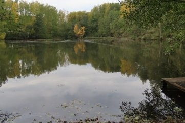 Der Rohrteich mitten im Werdauer Wald.