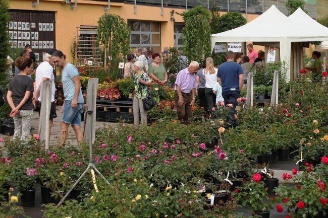 Ein Rosenmeer erwartete die Besucher des Rosenfestes am Wochenende in der Baumschule Mülsengrund.