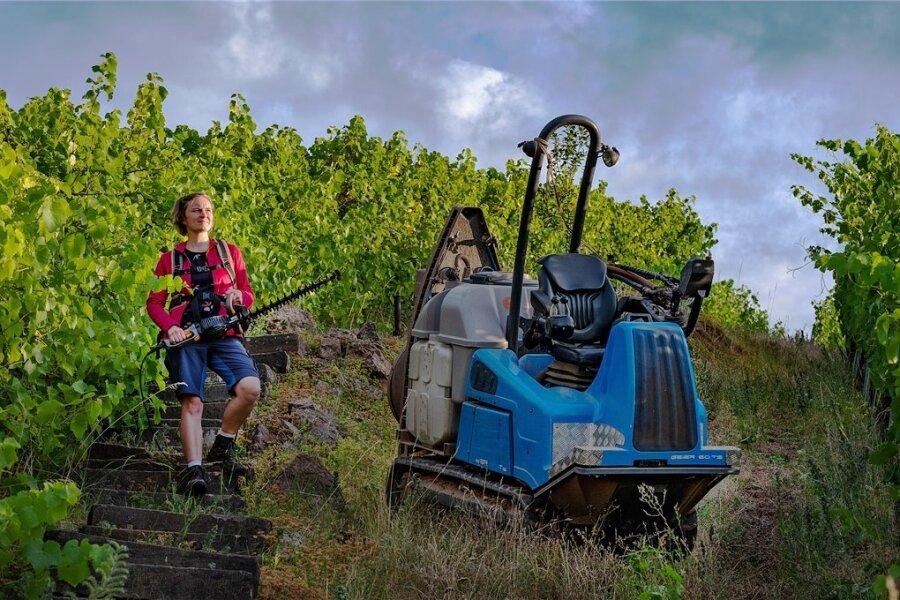 Ines Fehrmann hat an der Uni Geisenheim Önologie studiert, dann einige Jahre im Weingut ihres Vaters mitgearbeitet. Seit Januar ist sie offiziell die Chefin. Sie bewirtschaftet auf dem ehemals königlichen Weinberg in Cossebaude gemeinsam mit einem Mitarbeiter 3,5 Hektar Steillage.