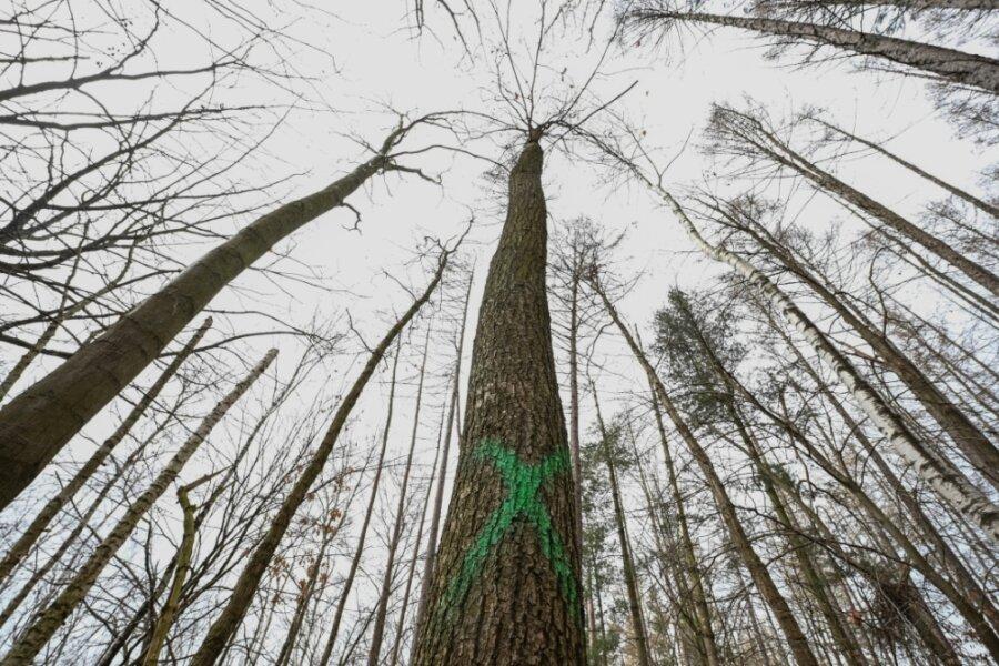 Bei Auerswalde sollen Waldstücke bearbeitet und kranke Bäume entfernt werden. Deshalb sind einige Wege zeitweise gesperrt.
