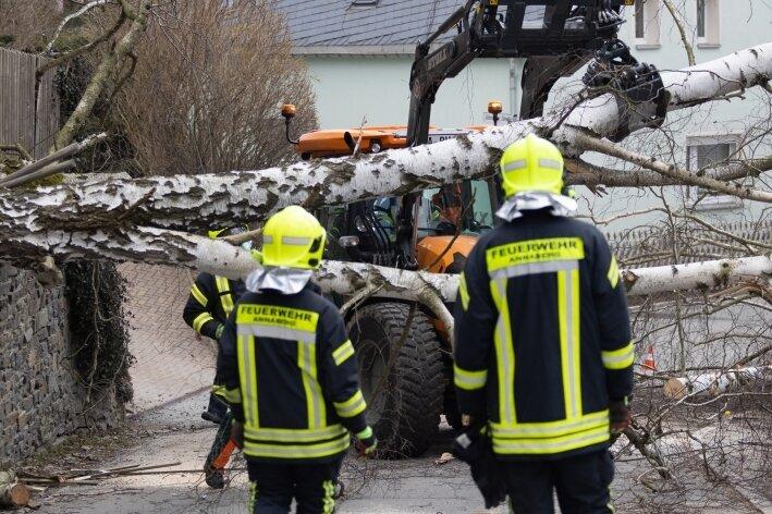 Baum beschädigt Stromleitung