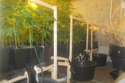 Bei der Durchsuchung eines leerstehenden Hauses an der Grünhainichener Straße beschlagnahmten die Beamten mehr als 100 Cannabispflanzen.