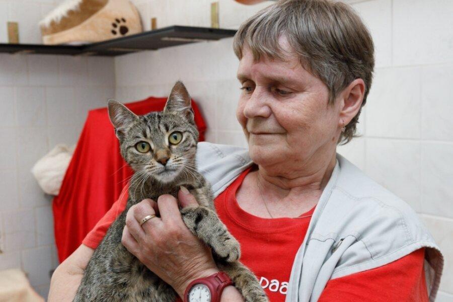 """Zwischen 200 und 250 Fundtiere wie Katze Fabienne aus Annaberg - im Bild mit Monika Eger - werden jährlich im Tierheim """"Neu-Amerika"""" versorgt. Zuständig dafür sind die Kommunen. Nun ringt der Betreiberverein darum, dass diese eine höhere Umlage zahlen."""