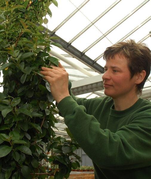 Ist die Mandevilla gesund? Mit einem Blick auf die Blattunterseite weiß es Pflanzendoktorin Gabriele Wendler.