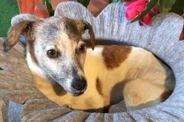 Dieser präparierte Hund bleibt ein Familienmitglied.