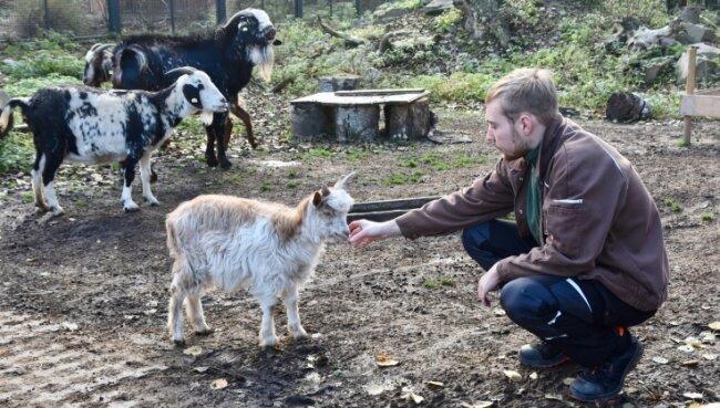 Tierpfleger Philipp Hans versucht, ebenso wie seine Kollegen, den Tieren die Streicheleinheiten zu geben, die sie sonst von den Besuchern bekommen würden.