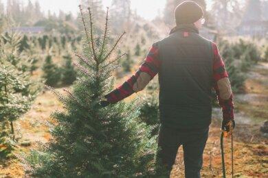 Dürfte dieses Jahr nicht so einfach werden: einen Weihnachtsbaum selber schlagen.