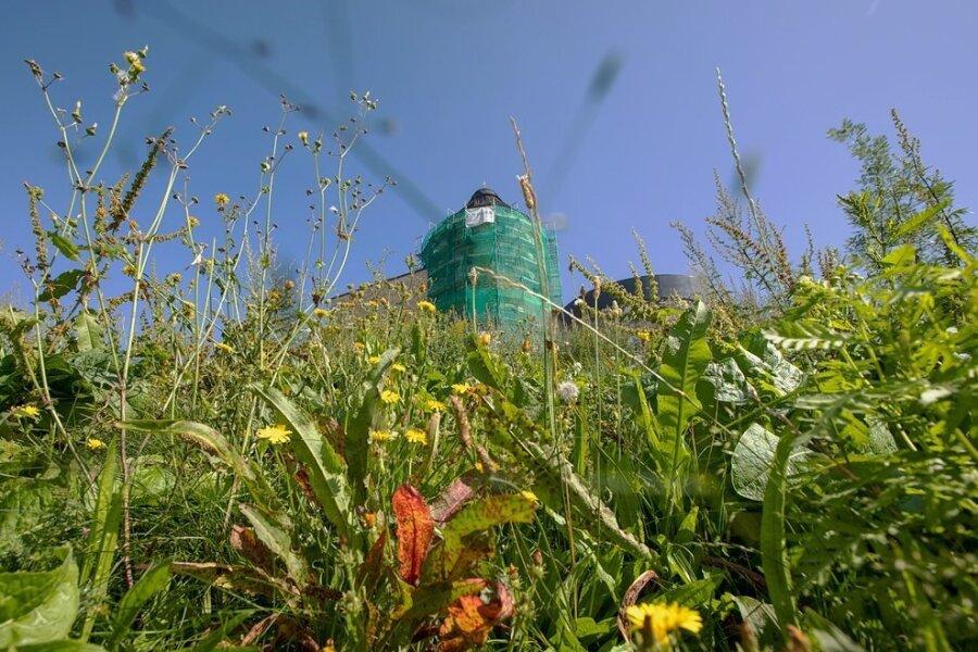 Es grünt so grün: Der Schlosshang ist üppig bewachsen - nicht nur mit gewünschten Wiesen- und Kräuterpflanzen, sondern auch mit reichlich Unkraut.