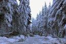 Auf einer Strecke von 400 Metern fällten die Kameraden der Freiwilligen Feuerwehr Reitzenhain am Samstagnachmittag 20 Bäume und beräumten Schneebruch.