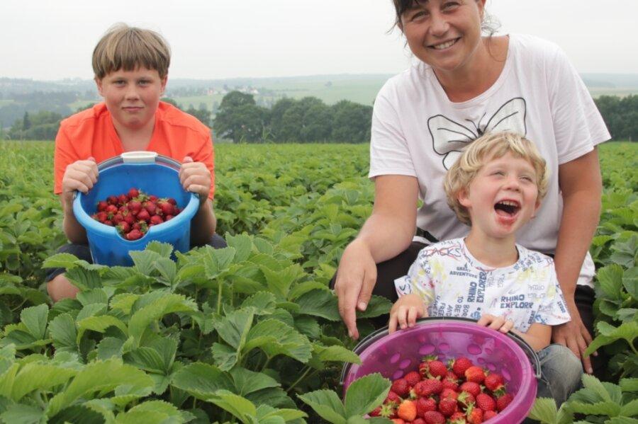 Nick (13), Katja und Nico (6) Pfeifer aus Treuen holten eimerweise Erdbeeren vom Rotschauer Feld.
