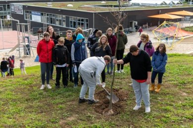 Im neu gestalteten Außenbereich der Wilhelm-Pfeffer-Schule haben Schüler am Mittwoch die Bäume gepflanzt.