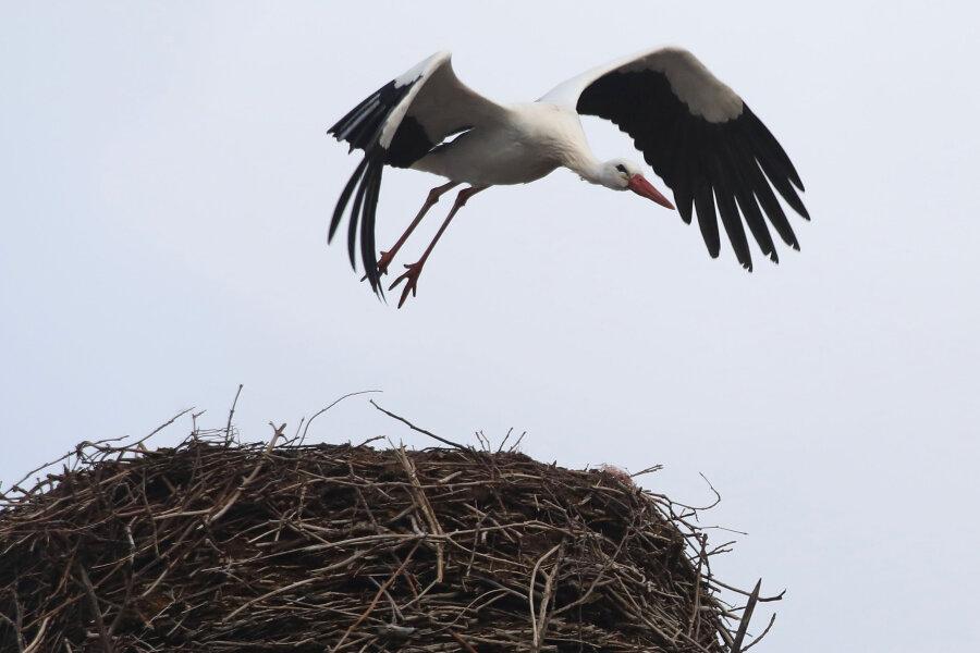 Erster Storch schon zurück aus Süden