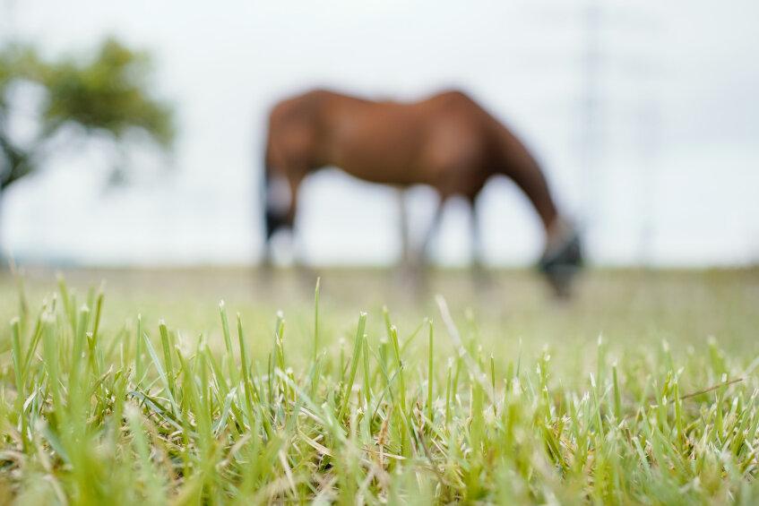 Behörden finden tote Pferde auf Hof im Vogtland - Besitzerin erhebt Vorwürfe gegen Landkreis