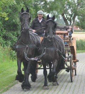 Friesen sind imposante Kutschpferde. Gerd Kelterborn führt die Zügel.