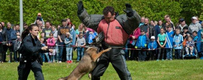 Viel Action bot die Vorführung der sächsischen Polizei mit ihrer Diensthundeschule. Der Respekt der Zuschauer gegenüber den schnellen Polizeihunden war fast mit den Händen zu greifen.