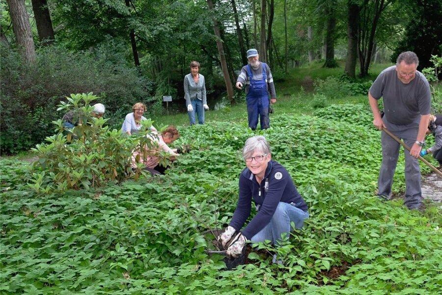 Das Team um die stellvertretende Vorsitzende Ines Schröter-Reißmann sorgte jetzt mit rund zehn Mitgliedern des Fördervereins Parkanlagen Reichenbach für schöne Beete im Stadtpark.