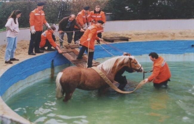 Skurriler Einsatz am Pool 1997: Vier Stunden lang pumpten die Wehrleute Wasser heraus, um das Pferd zu befreien.