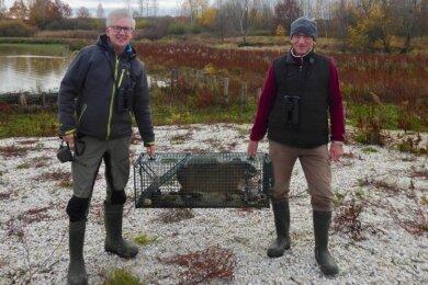 Ornithologe Jens Hering (links) und Naturschutzhelfer Dieter Kronbach am Großen Teich in Limbach-Oberfrohna beim Abtransport eines Wasserschweins. Das Tier war auch mit Brötchen angelockt worden.