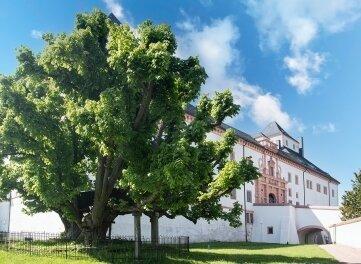 Der Überlieferung nach wurde die Linde 1421 gepflanzt und gehört somit zu einem der ältesten Bäume Deutschlands.