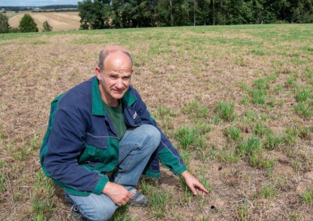 Enrico Jahn von der Agraset-Agrargenossenschaft Naundorf zeigt Mäuselöcher auf einem Feld bei Frankenau. Die Fläche wurde von Mäusen regelrecht abgefressen.