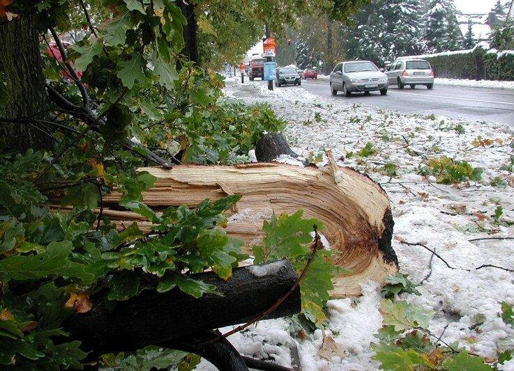 An der Chemnitzer Straße in Freiberg sind zahlreiche Äste durch die Schneelast abgebrochen.