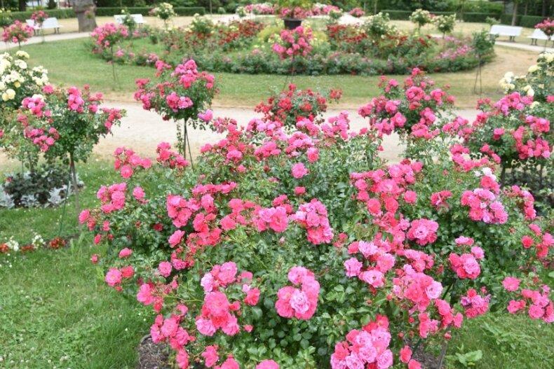 Der Rosengarten wird jedes Jahr von vielen Besuchern bestaunt und die Ruhe hier genossen. In Bad Elster waren bisher werktags von 12 bis 14 Uhr keine lärmintensiven Arbeiten erlaubt. Das ändert sich.