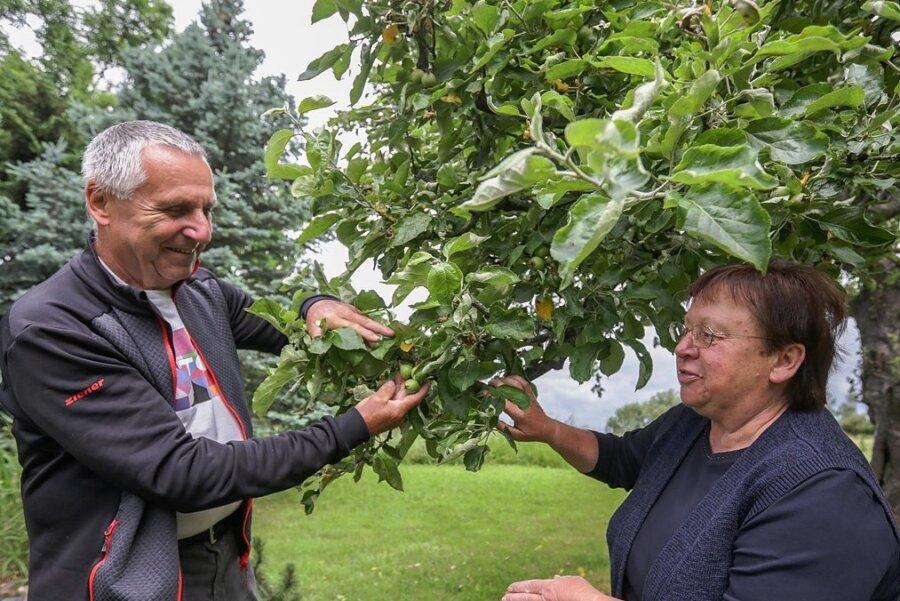 Annelie und Rainer Goldammer haben ihren Obst- und Gemüsegarten im Burgstädter Ortsteil Herrenhaide vorgestellt, wo unter anderem ein 80 Jahre alter Apfelbaum der Sorte Renette steht.
