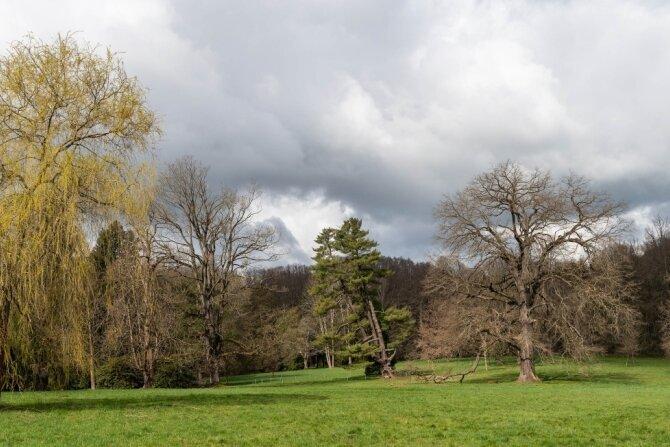Der Schlosspark in Wechselburg soll zu neuem Leben erweckt und bereit für die Zukunft gemacht werden. Ein Herzstück ist die große Wiese, auf der unter anderem die sich neigende Weymouthskiefer wächst (Mitte).