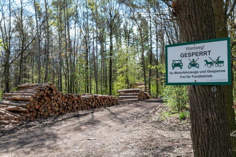 Hier im Forst zwischen der Firma STM Montage und der Bahnstrecke im Ortsteil Berthelsdorf könnte ein Bestattungswald entstehen.