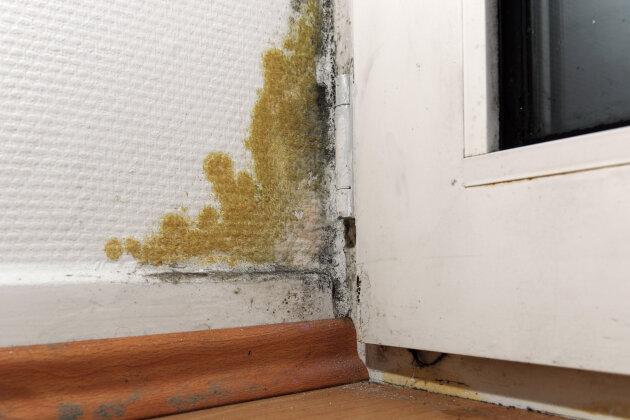 Infrarotsperren gegen Hausschimmel